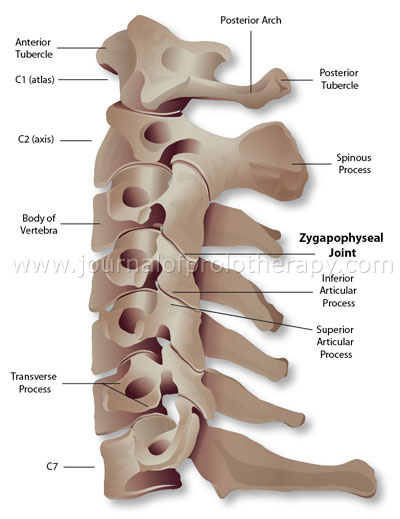 cervical_spine_fig_01[1]
