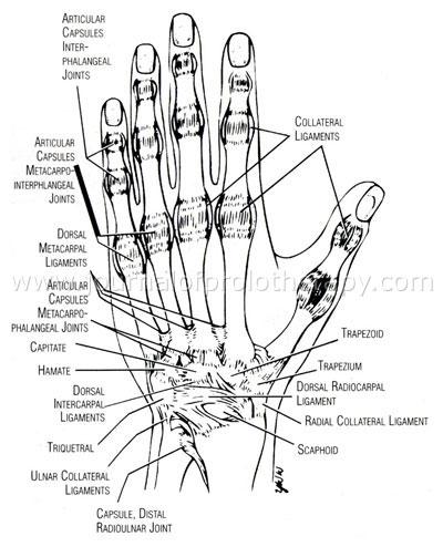 hand_study_fig_02[1]
